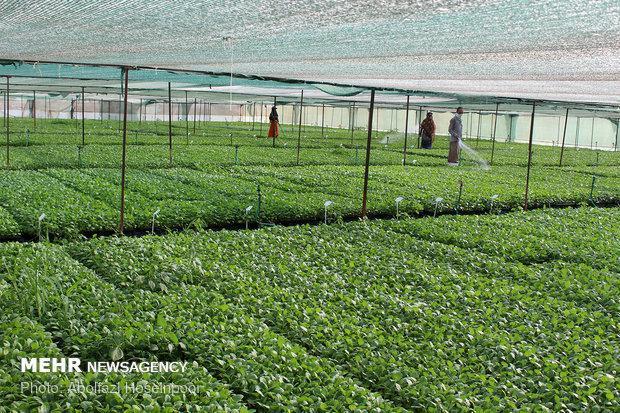 افتتاح طرح های جهاد کشاورزی در شهرستان بناب
