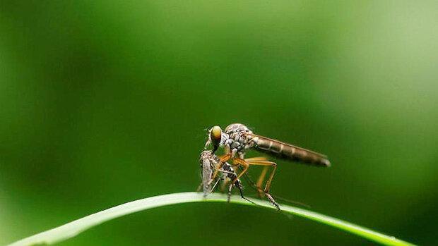 آزمایش پیروز در چین ، نابودی کامل پشه های مرگبار در دو جزیره