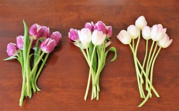 روش های ساده برای جلوگیری از پژمردگی گلهای لاله