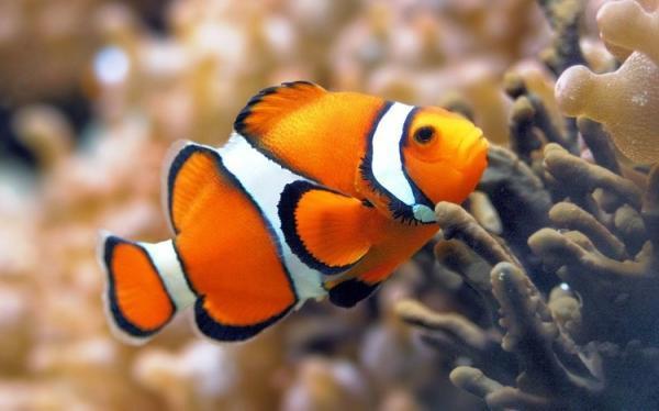 آیا ماهی ها زبان دارند؟